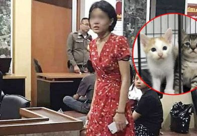 DJ charged with killing 27 cats