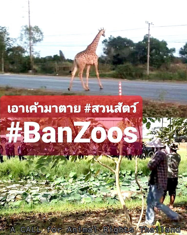 Facebook page: A Call for Animal Rights Thailand