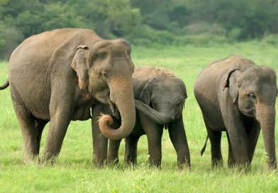 What to Look for at an Elephant Nature Park